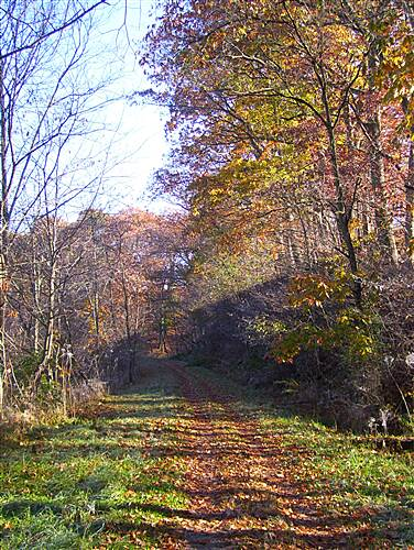 Allegheny Highlands Trail Autumn on the