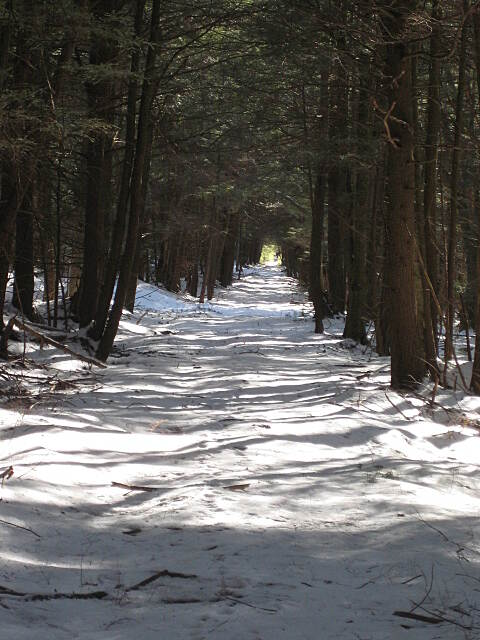 Allegheny National Forest - Heart's Content XC Ski Trail Heart's Content in February Old railroad grade trail