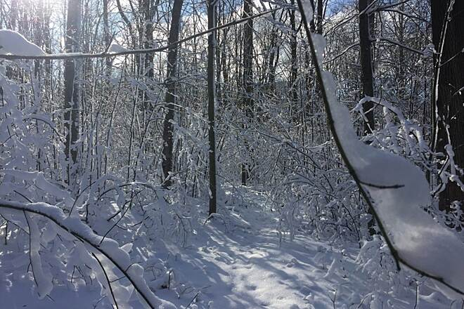 Allegheny National Forest - Twin Lakes Trail Winter Hiking Nature weighed by winter.