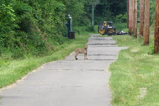 Allegheny River Trail  Allegheny River Trail Bobcat Share the trail or passing on the left?