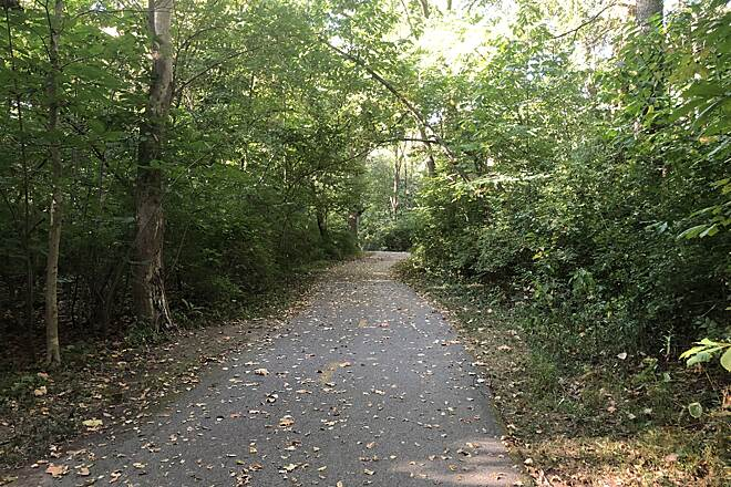 Alum Creek Greenway Trail Well-shaded Trail As you can see the Alum Creek Greenway Trail provides plenty of shade for users and plenty of cover for local wildlife.  November 2019