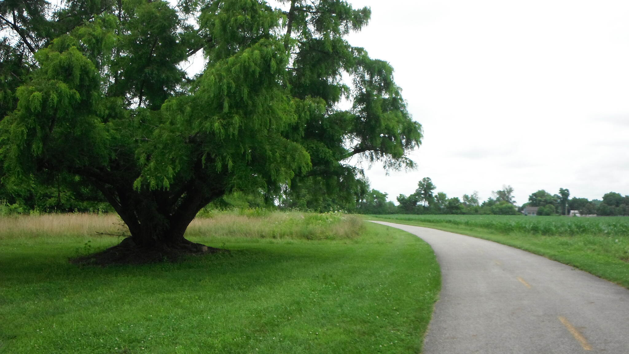 Alum Creek Greenway Trail tree