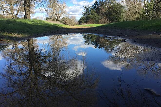 American River Bike Trail (Jedediah Smith Memorial Trail) Trail puddle reflections.  Just a 2 foot wide puddle, but big reflection!