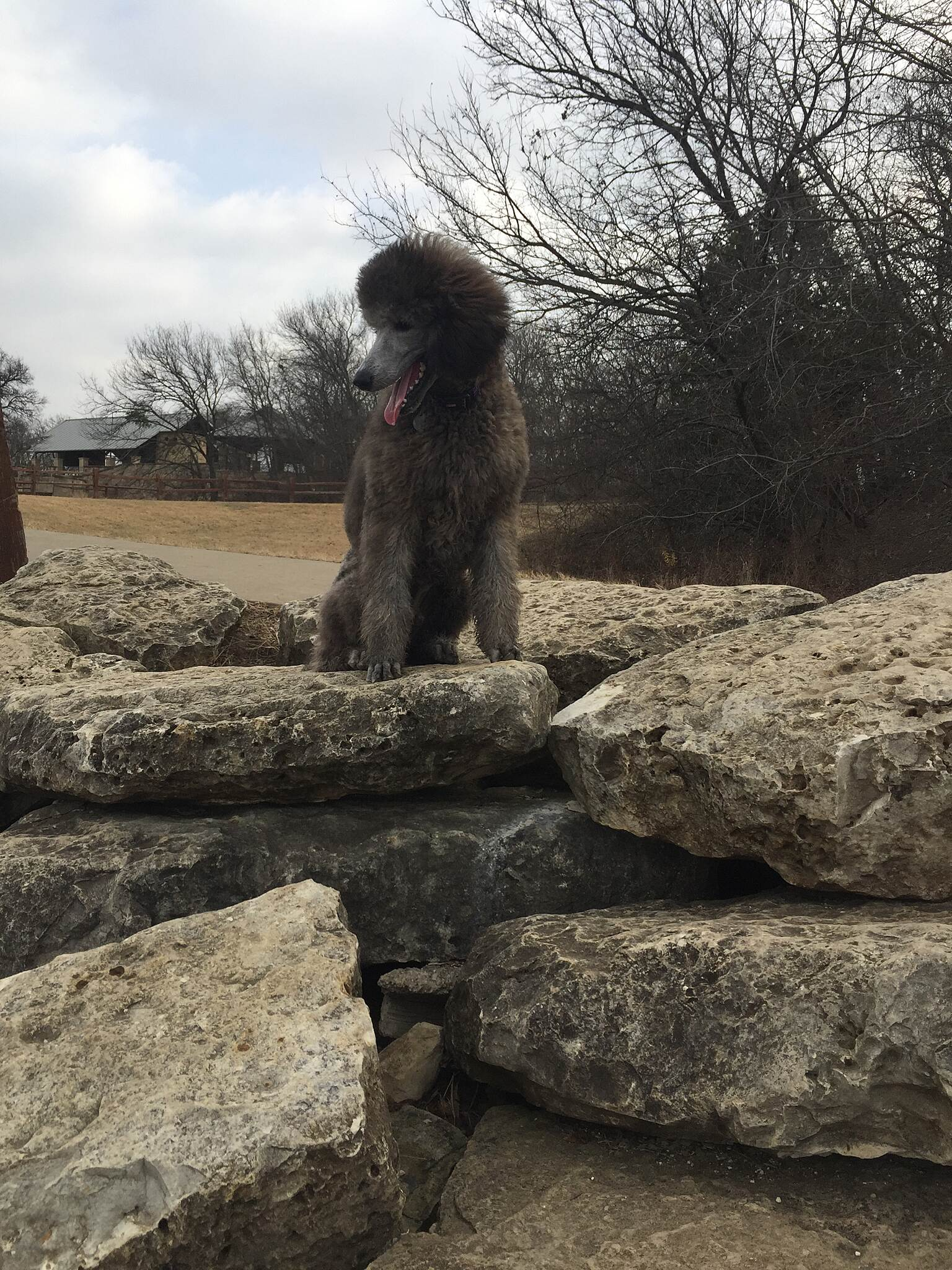 Arbor Hills Trail Lannister Regal boy isn't he