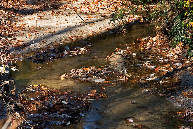 Avon and Catawba Creeks Greenway Down by the Creek This view of Avon Creek is looking North.