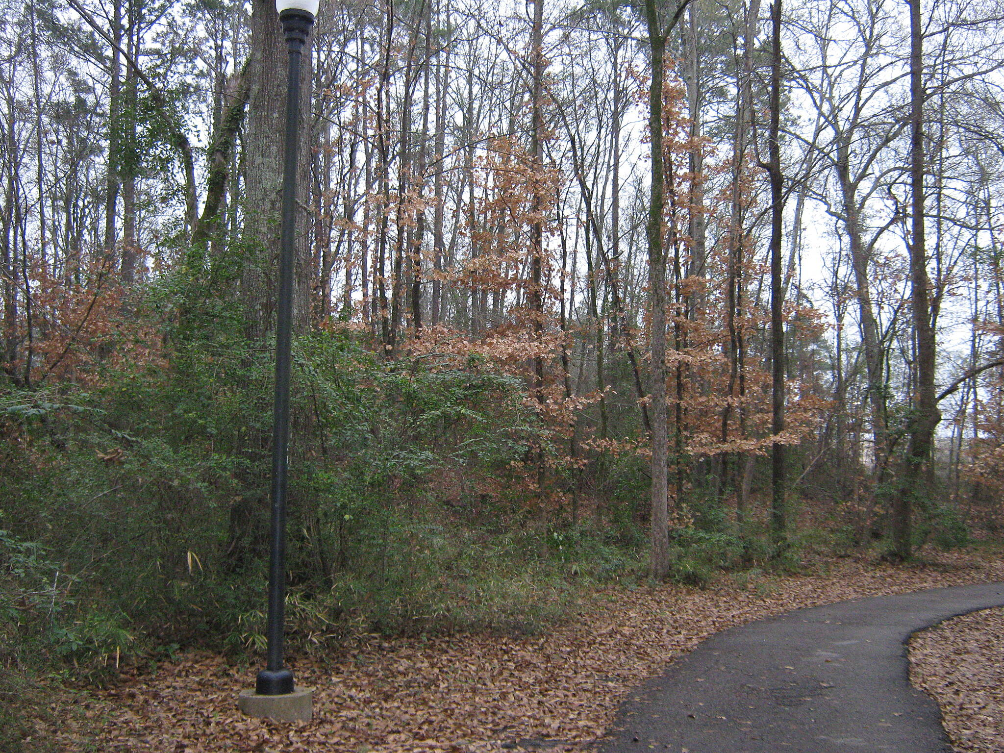 Azalea Trail Azalea Trail - Lufkin Pathway toward the end of the trail.