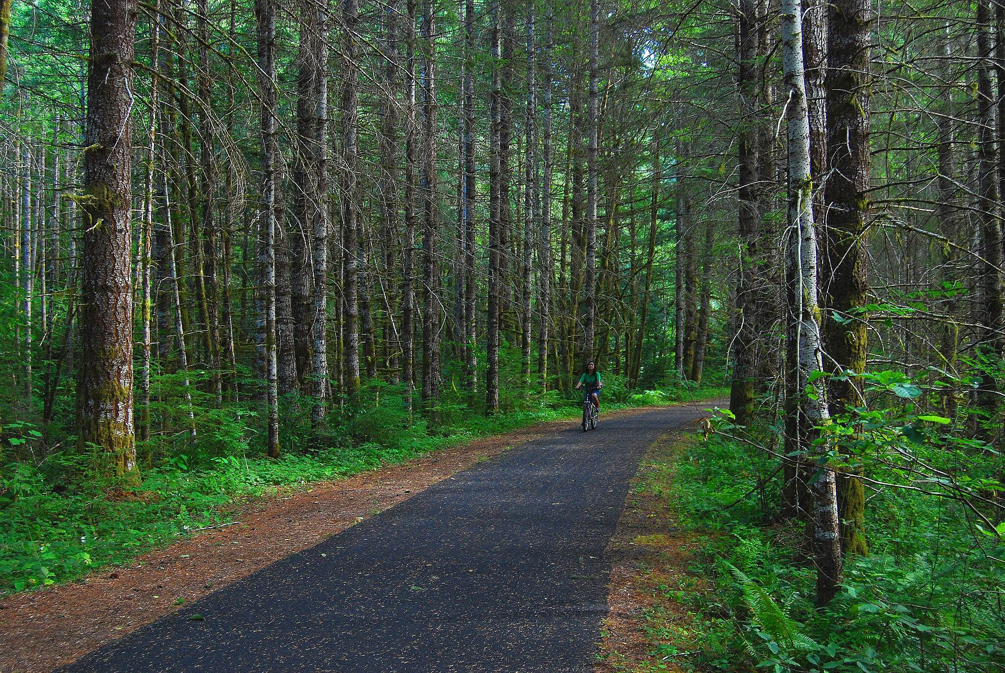 Banks-Vernonia State Trail Banks Vernonia path riding thru the tall trees on the Banks Vernonia bike path.