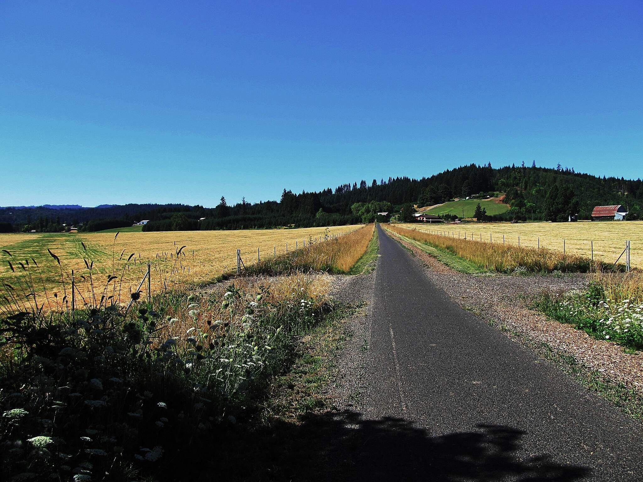 Banks-Vernonia State Trail Before the climb.... The last 'level' stretch before beginning the long climb up into the Costal Range of mountains.