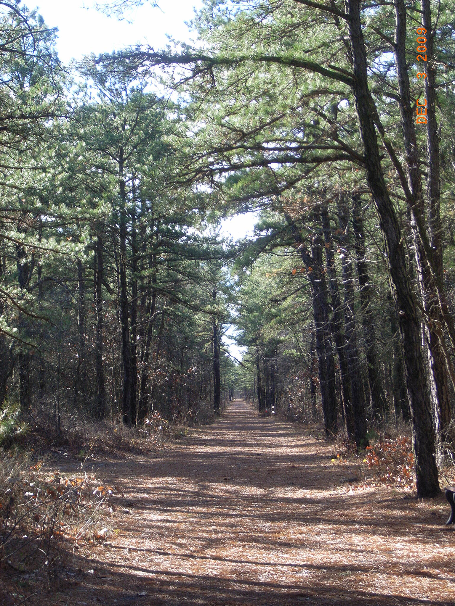 Barnegat Branch Trail Barnegat Another stetch of tall pines..........smells so good!