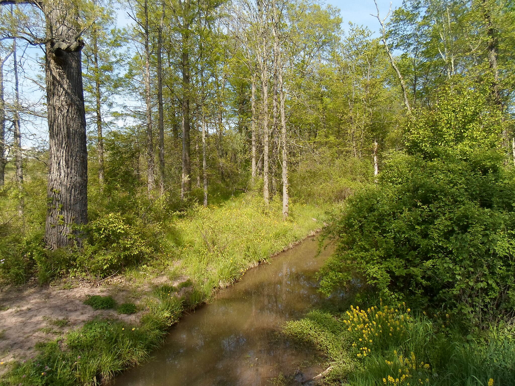 Barrel Run Trail Barrel Run Trail View of the stream that the trail parallels for most of its length; this was taken from the footbridge behind Trumbauersville Elementary School.
