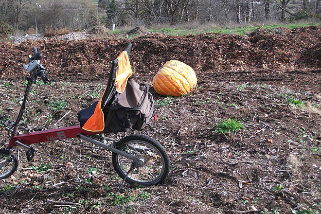Bear Creek Greenway Near South end. Kept looking for Charlie Brown to claim this pumpkin.