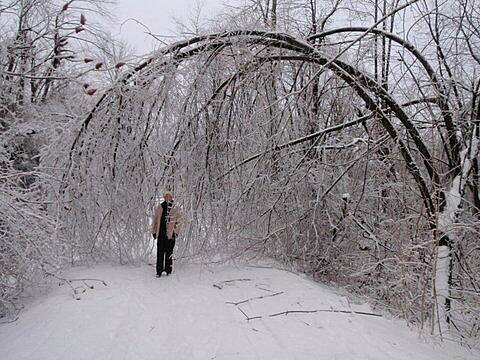 Black River Trail 2013/14 ice storm Heavy ice on the trail. Photo by David Larrabee.