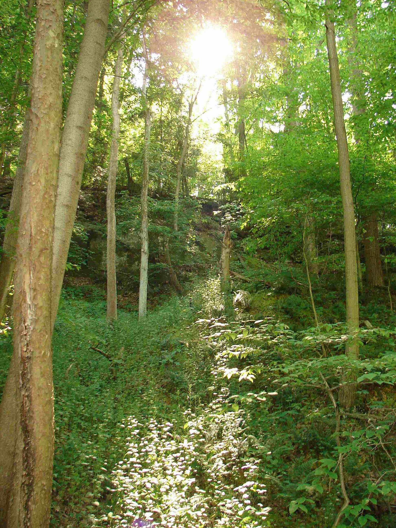 Blackhand Gorge Trail Pretty view of sun peeking through trees Much of the trail looked like this