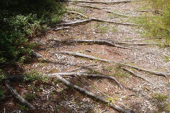 Bloomingdale Bog Trail   New York Trails   TrailLink