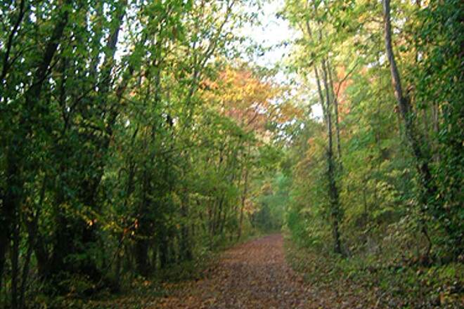 Bloomington Rail Trail Southern section -- Heading south Southern section -- Heading south