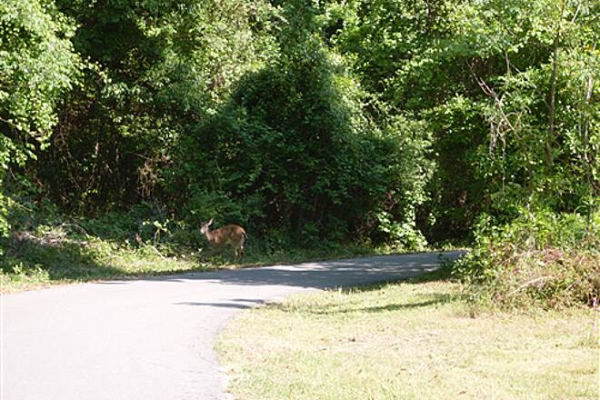 Blountstown Greenway Bike Path Greenway Bike Path View of wildlife on path