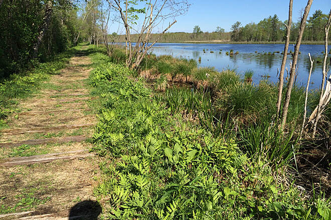 Bog Meadow Brook Nature Trail May 18, 2014 ride- rcoffey The sunlight was perfect o my ride...