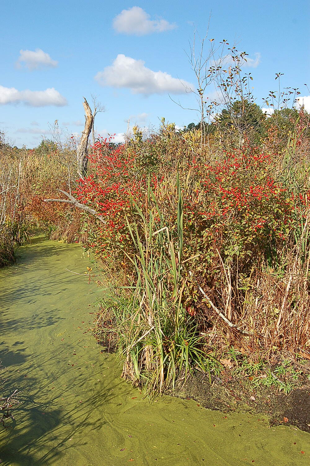 Border to Boston Trail colorful swamp colorful swamp