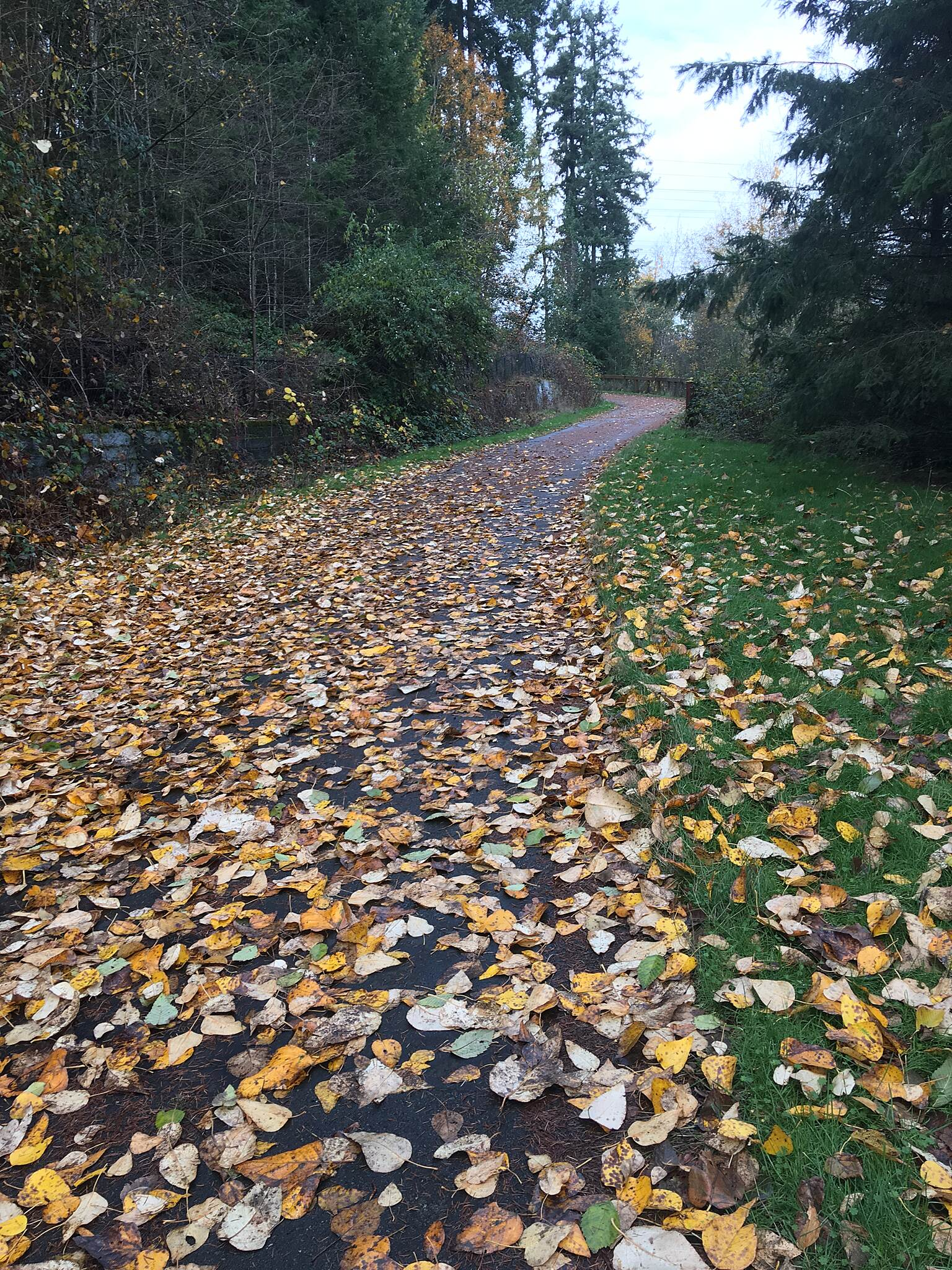 BPA Trail BPA Trail Federal Way at the base of the big hill at 348th across from the Aquatic Center. Fall 2017