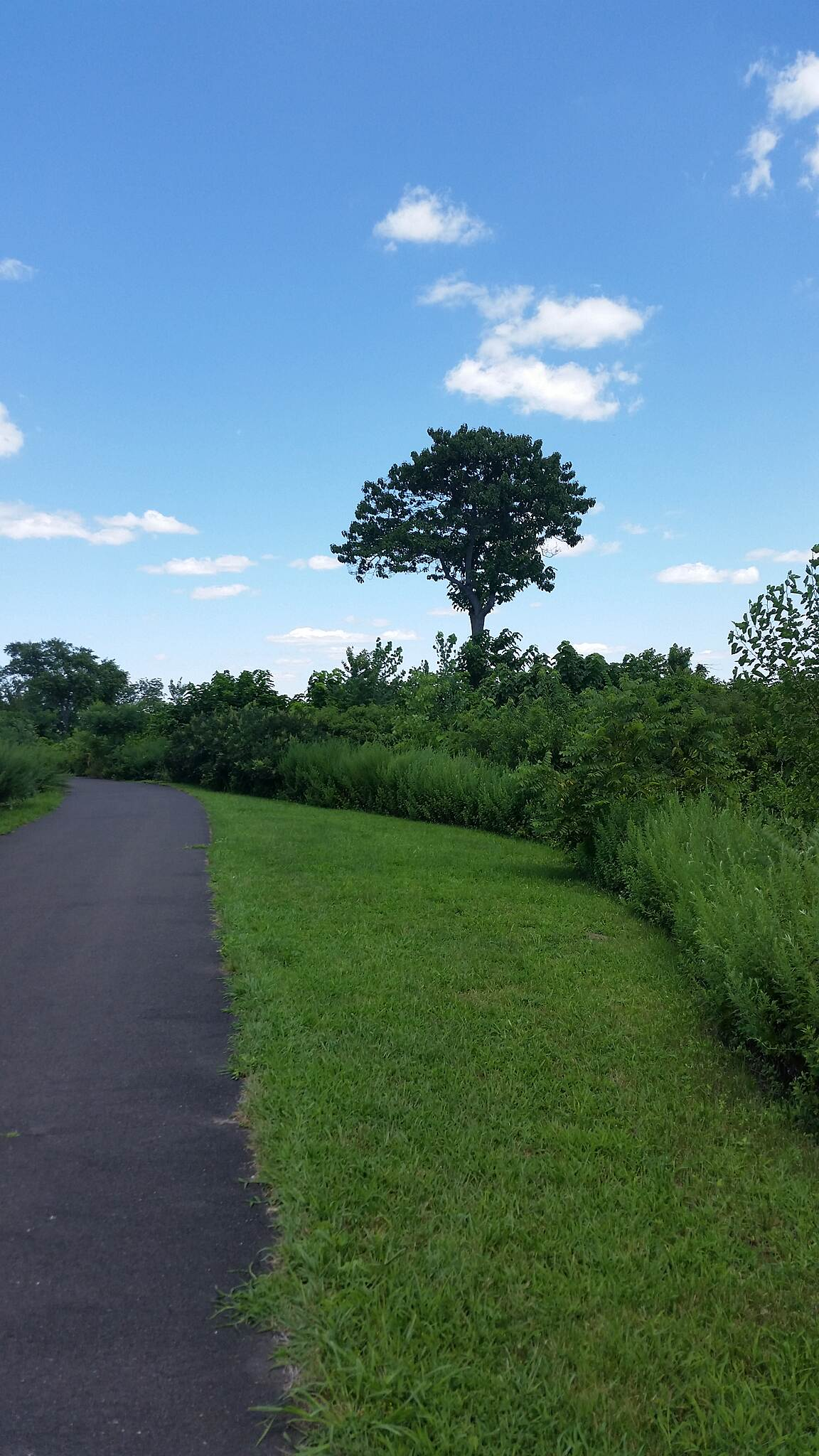 Bristol Spurline Park Trail as it runsure along deleware Tree