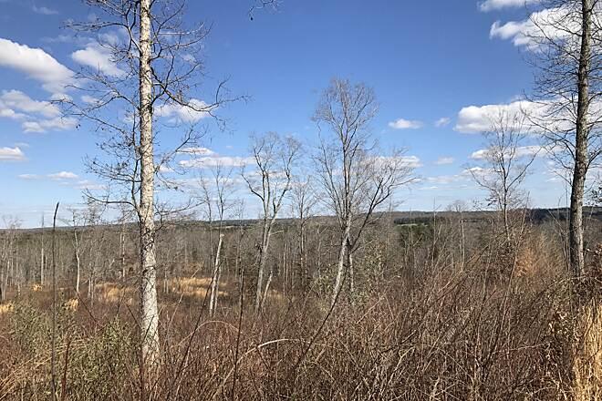 Buffalo Creek Preserve Trail | North Carolina Trails | TrailLink