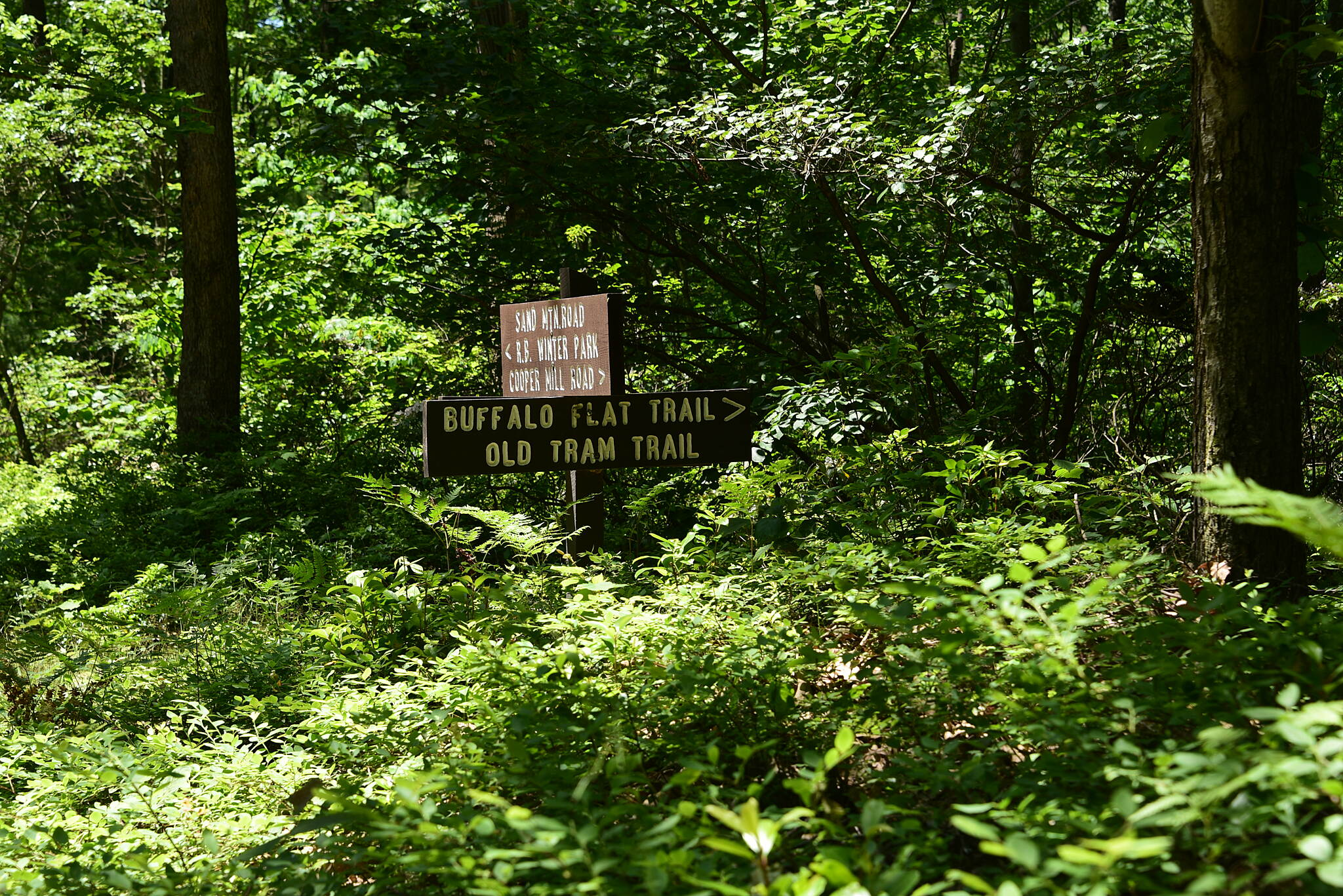 Buffalo Flat Trail Close-up of Trailhead Sign Trailhead sign & Street Sign along side Sand Mountain Rd
