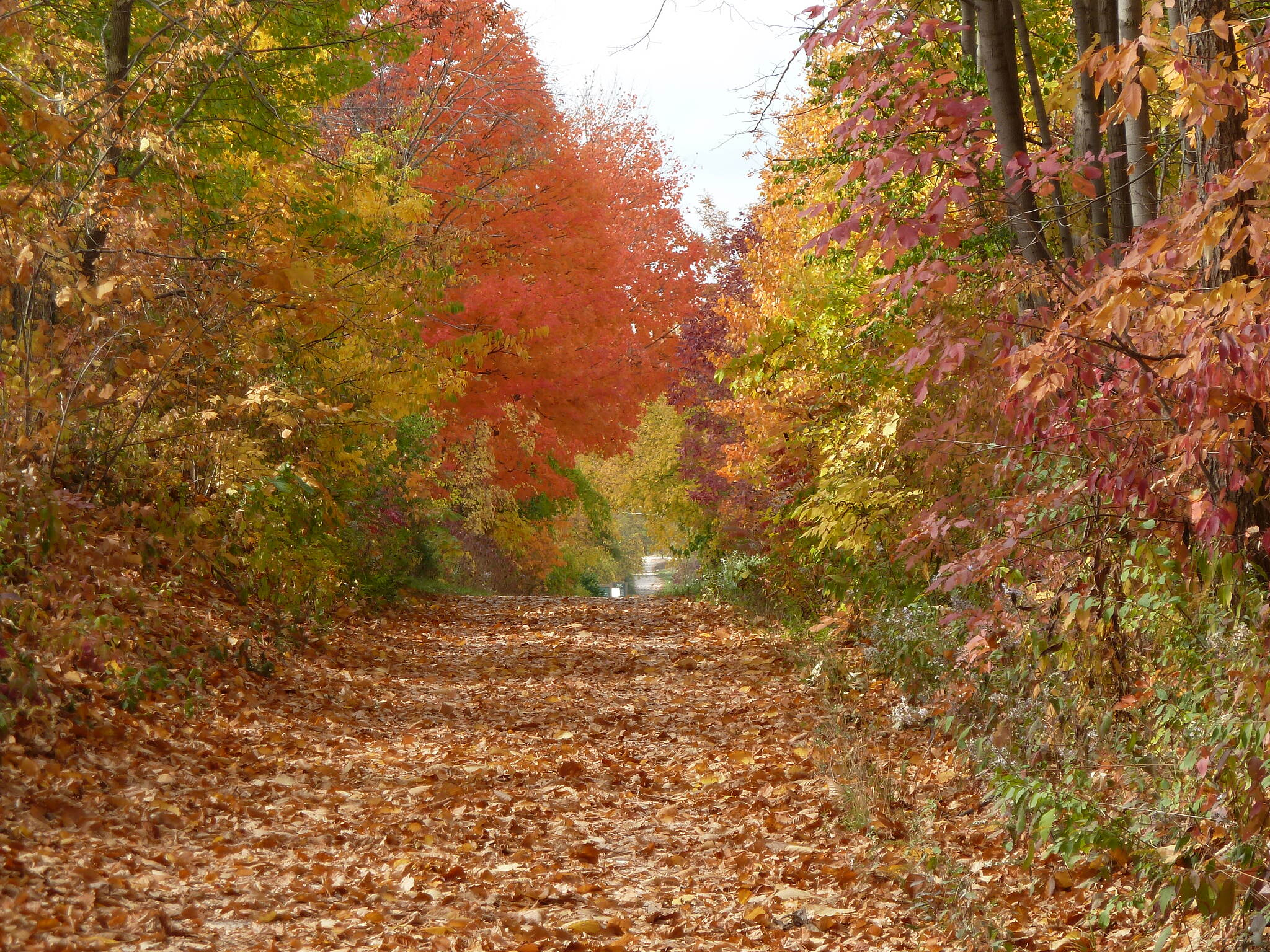 Bugline Trail Bugline-in fall Love the changing seasons