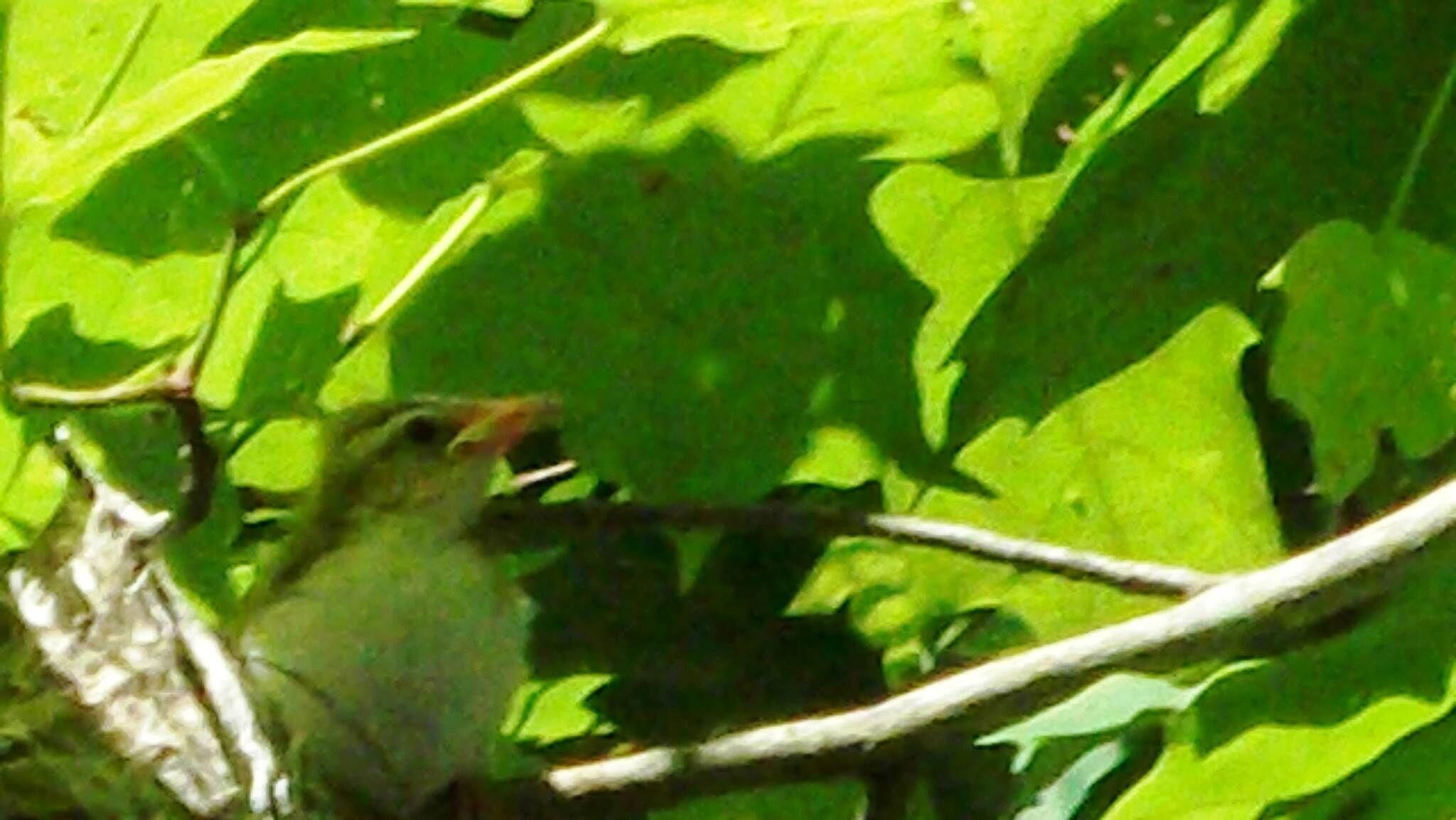 Butler-Freeport Community Trail Unknown Baby Bird Side View Unknown baby bird side view. Can anyone identify this baby?