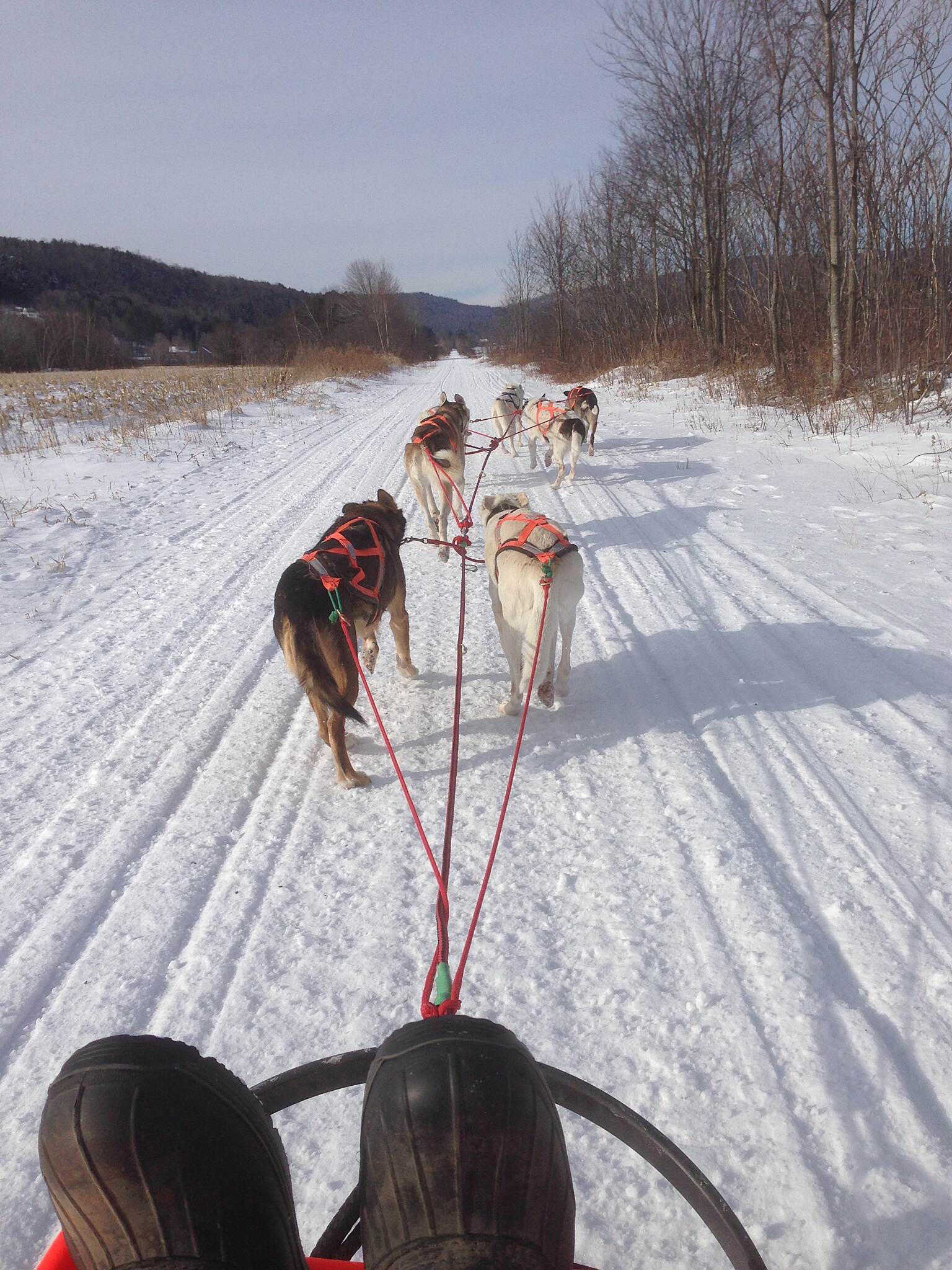 Cambridge Greenway Mushing the rail trail The Scofflaw Dawgs running the Cambridge Greenway. January/2015