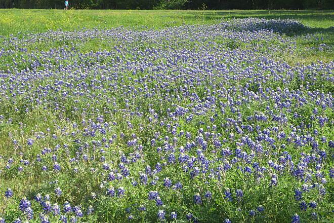 Campion Trail | Texas Trails | TrailLink.com