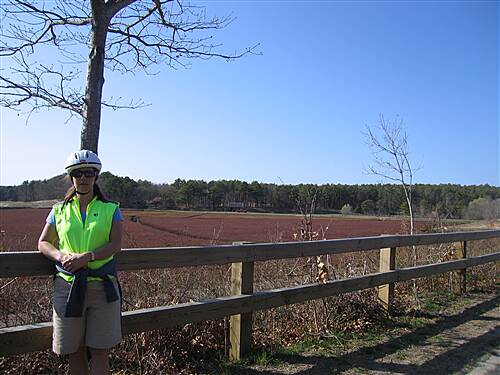 Cape Cod Rail Trail Cranberry bog - April 2008 Cranberry bog - April 2008