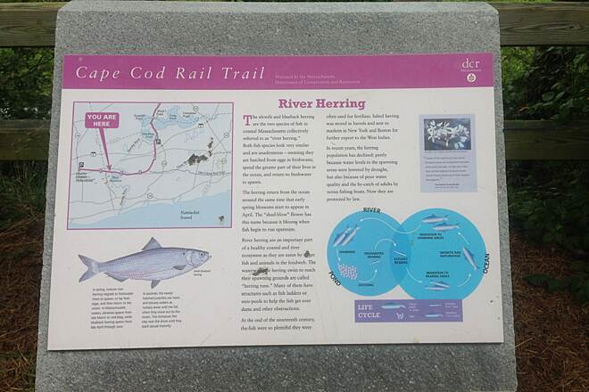 Cape Cod Rail Trail North Harwich, MA. Plaque about the River Herring found near the trail in Harwich.