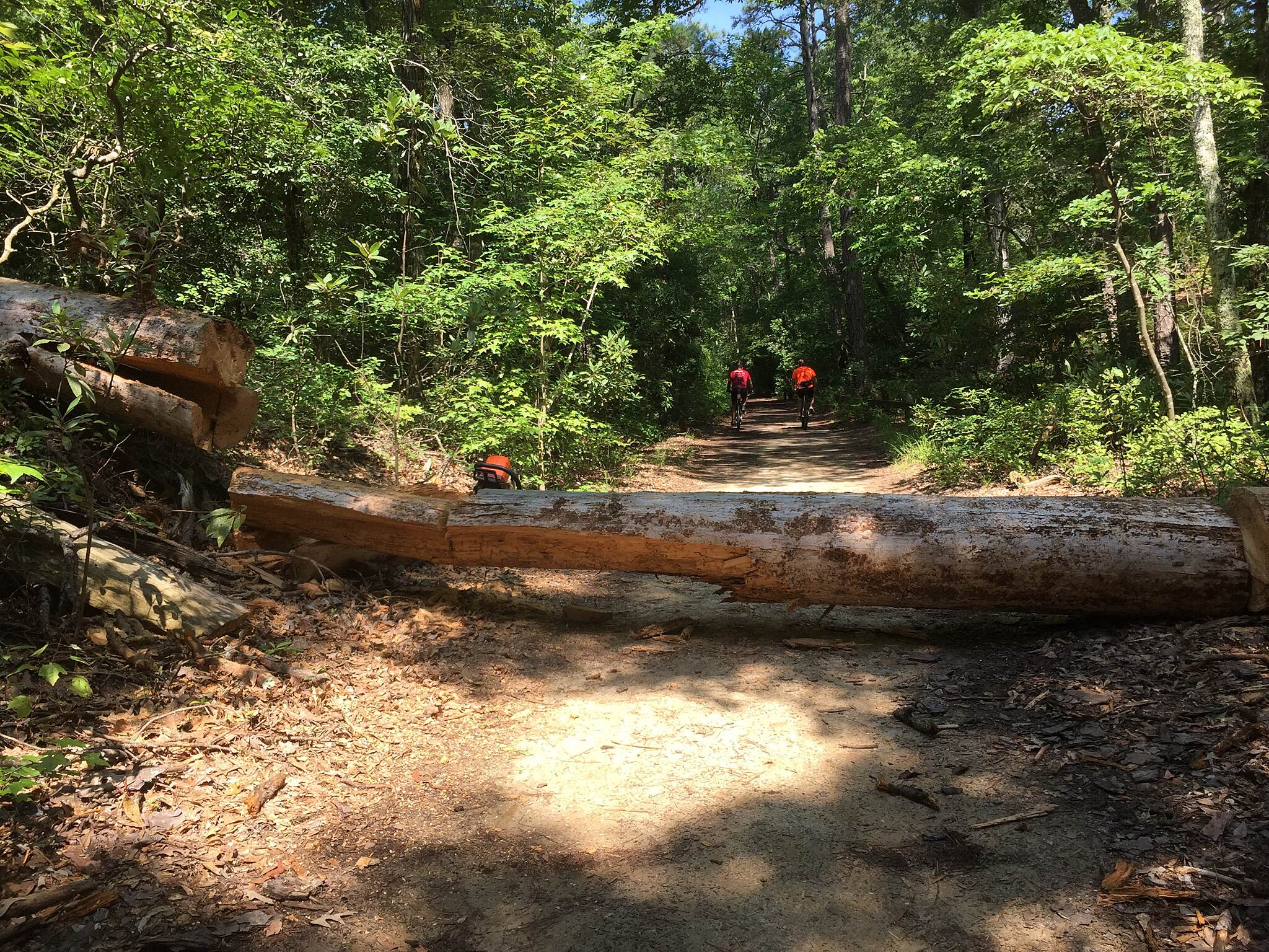 Cape Henry Trail Tree down Picture taken by RGarciaSunday July 19, 2015