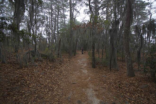 Cape Henry Trail  Trees and Spanish Moss A wonderful place filled with wonderful trails, and dogs are allowed!