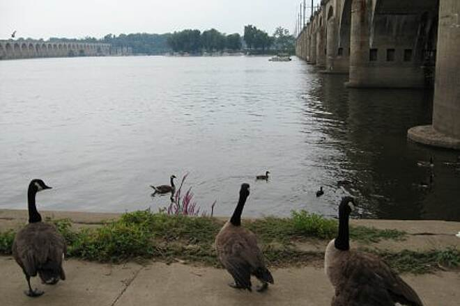 Capital Area Greenbelt Canada Geese Canada Geese gather under a bridge on the Susquehanna.
