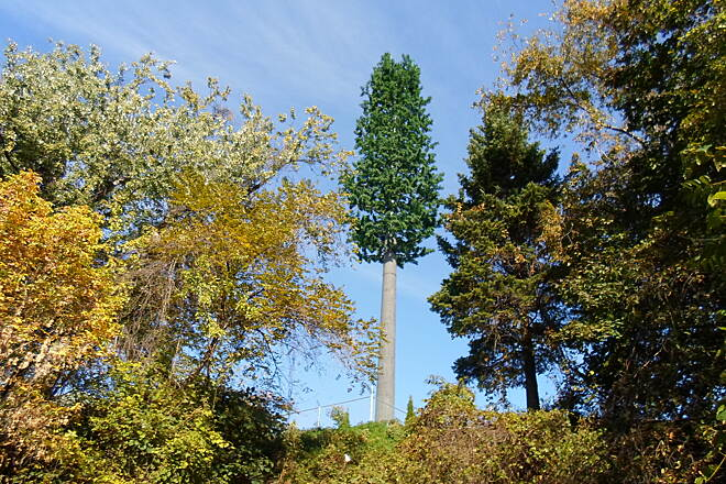Capital Area Greenbelt Capital Area Greenbelt If you take a close look, you can see that the tall 'tree' that seems to tower above the others is not really a tree at all. It is a cell phone tower creatively disguised as one. This unusual feature can be seen just south of Pembrooke.