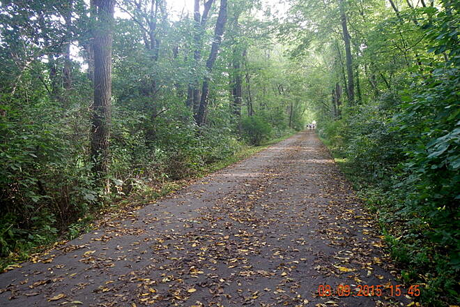 Cedar Prairie Trail Shade A shady section of the Trail.  Noel Keller 8 Sep 15