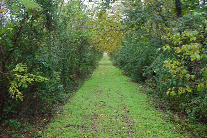 Chaparral Rail Trail The Green Carpet This was taken between Ladonia and Pecan Gap