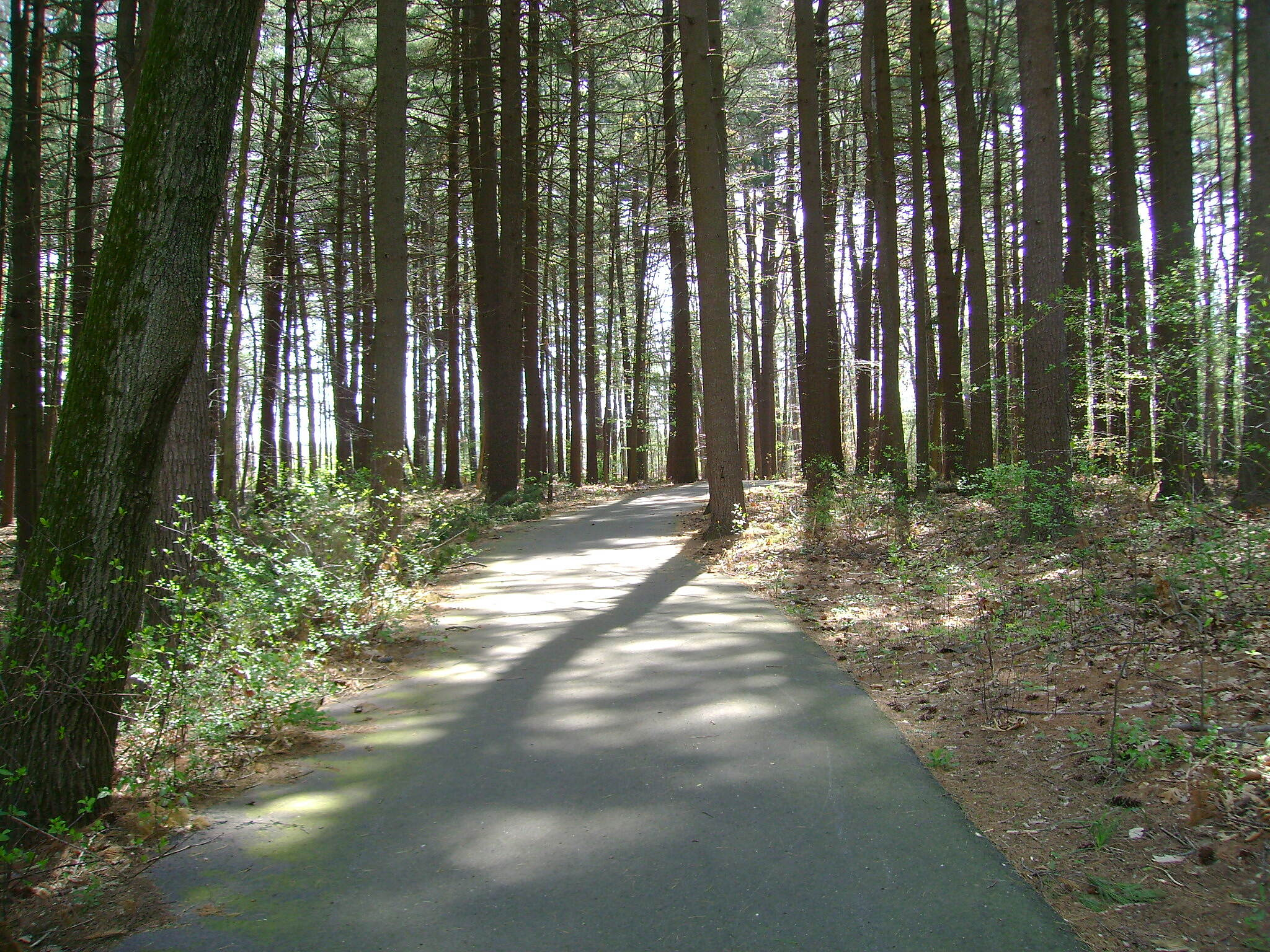 Charter Oak Greenway Woods outside of Manchester Community College