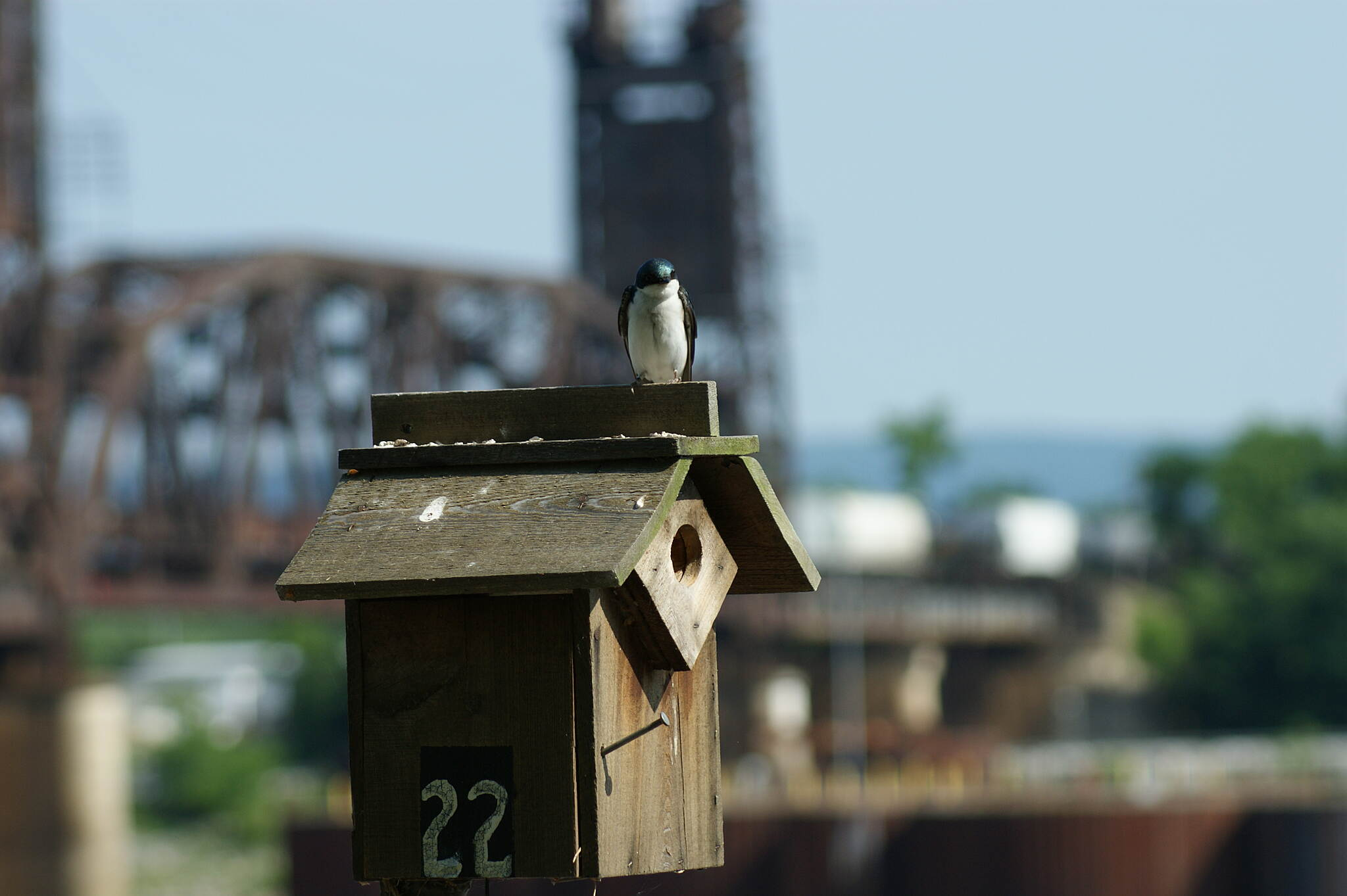Chattanooga Riverwalk (Tennessee Riverpark) Tree Swallow near the Dam Tree Swallow near the Dam, House #22, with Train in the background.