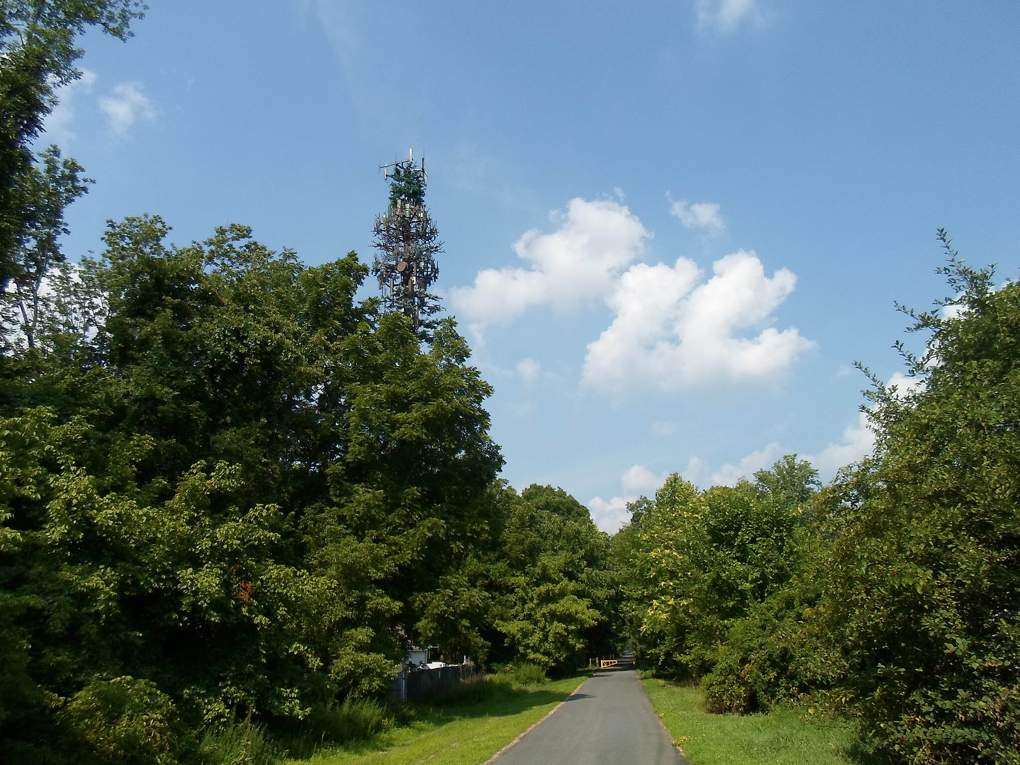 Chester Valley Trail Chester Valley Trail Trail users will encounter an unusual site east of Cedar Hollow Road; notice the dishes on the blue spruce 'tree?' This is one of those cell phone towers thinly disguised as a tree. What a joke!