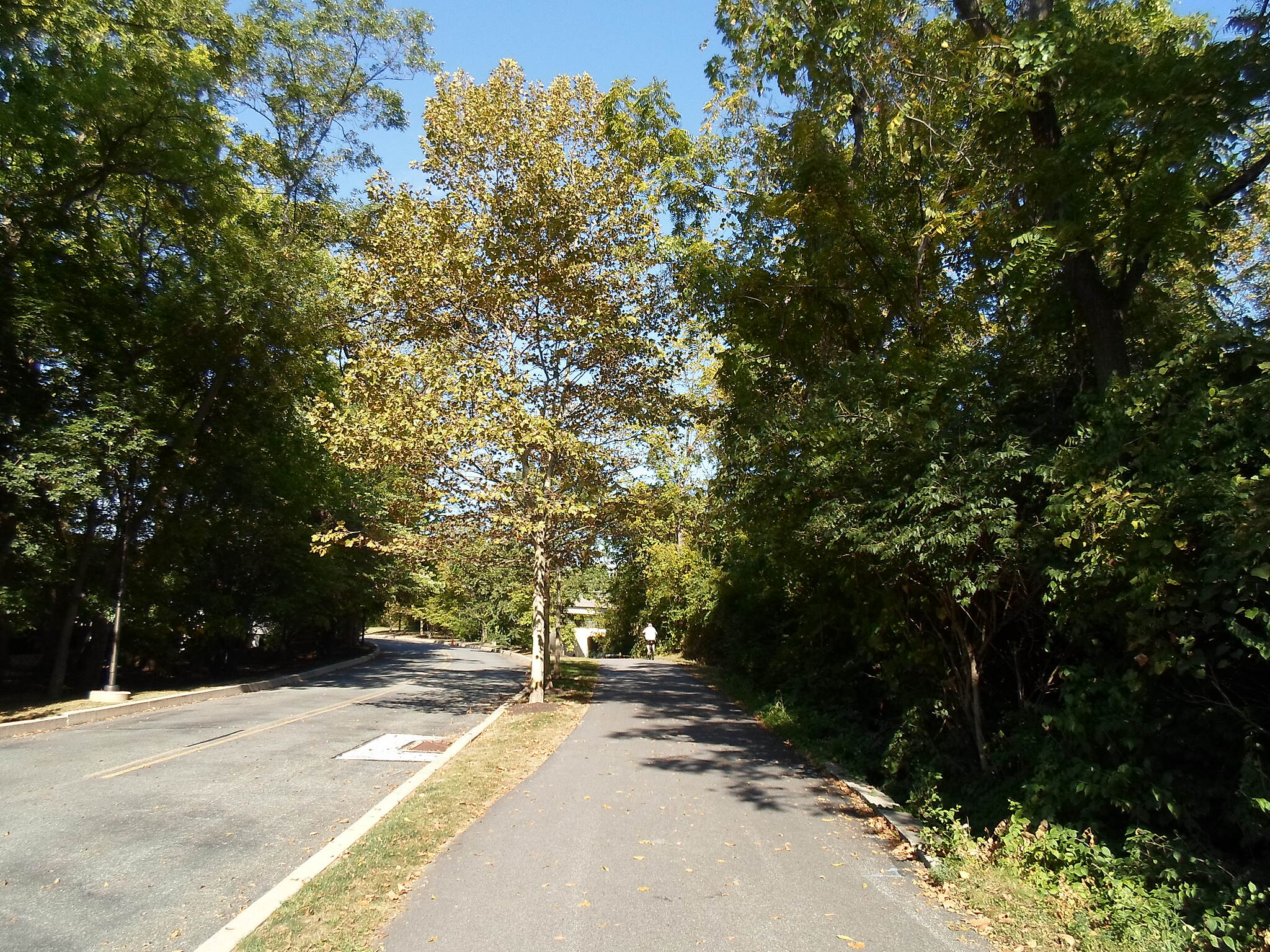 Chester Valley Trail Chester Valley Trail Afternoon sun shining against the trees in the office park west of Route 252. Taken Sept. 2015.