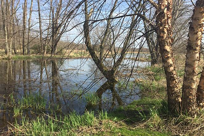 Chippewa Inlet Trail Wetland Swamp Along the Chippewa Inlet Trail In some areas of the trail, water is found on both sides of the bike path.  High water levels can cover the trail in some areas, especially after numerous days of precipitation.  April 12, 2017.