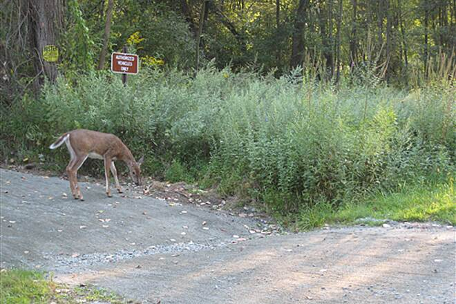 Columbia Trail Deer Crossing We see many deer on the trail - and they seem not to be afraid of bikes or cameras.