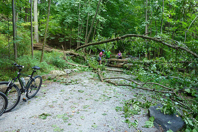 Columbia Trail Fallen Tree at 1 mile marker from High Bridge 8/4/12 - Bikers and joggers had a bit of an obstacle course to contend with.
