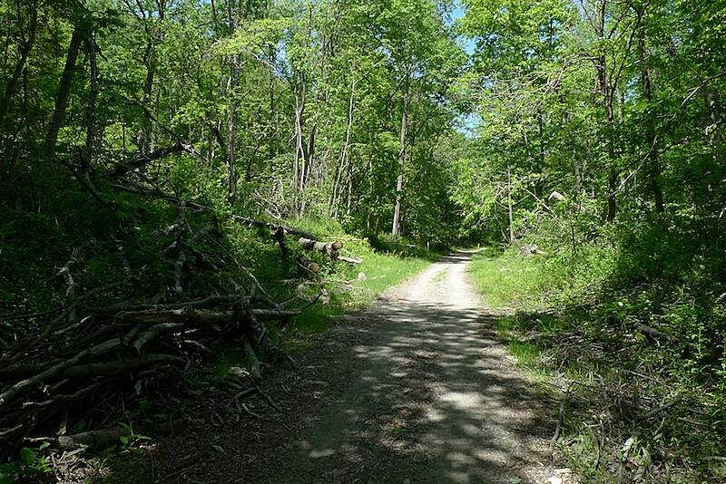 Columbia Trail Typical forestal scenery while riding the trail