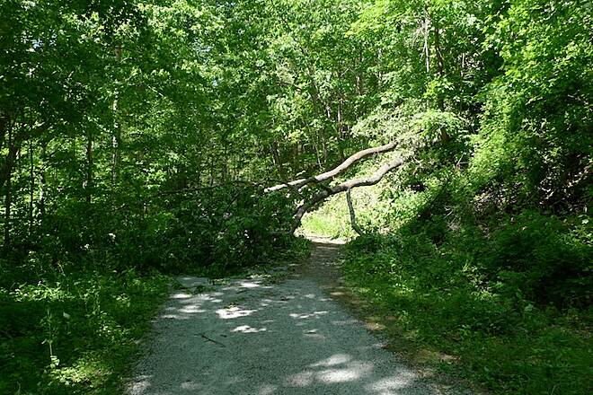 Columbia Trail Large tree blocking the path
