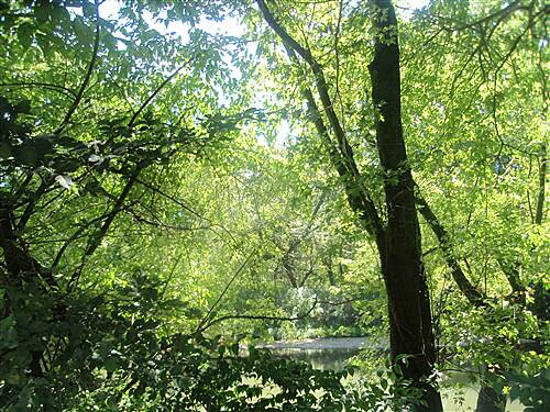 Conestoga Greenway Trail Conestoga Greenway Most of the trail passes through lush woodlands. You wouldn't know you were on the edge of a city.