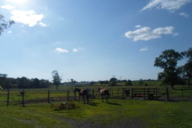 Conewago Recreation Trail Conewago Recreation Trail Horses off the trail in Bellaire; taken June 2015.