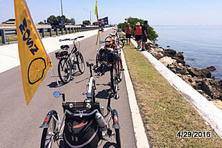 Courtney Campbell Trail MOSN riders watching sea life Mt. Olive Shores North bike & trike riders on the Courtney Campbell Trail. Bait fish, Mullet, a Ray and several Manatee spotted from the trail. A wonderful ride across Old Tampa Bay. This is a 'Must Do' trail.